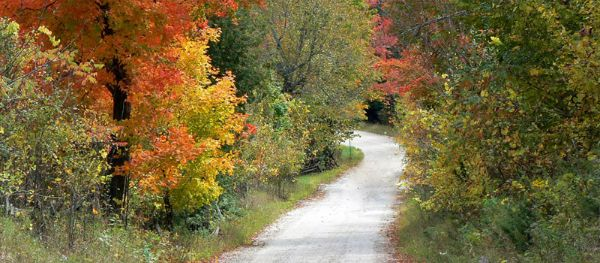 country road surrounded by trees with fall colours
