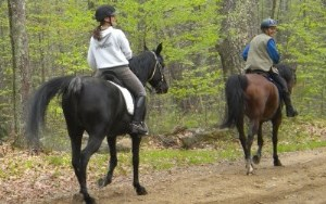 2 horses and riders on trail